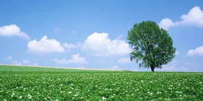 """生态环境部召开""""十四五""""土壤生态环境保护规划编制启动会"""